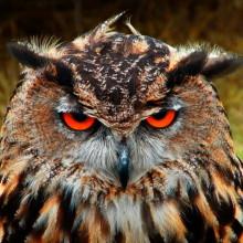 owl_quadrat